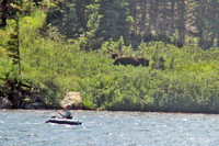 Bull Moose Long Lake