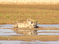 North Luangwa Wildlife 2006